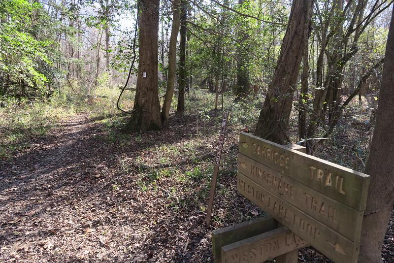 Weston Lake Loop-Oak Ridge Trail Junction