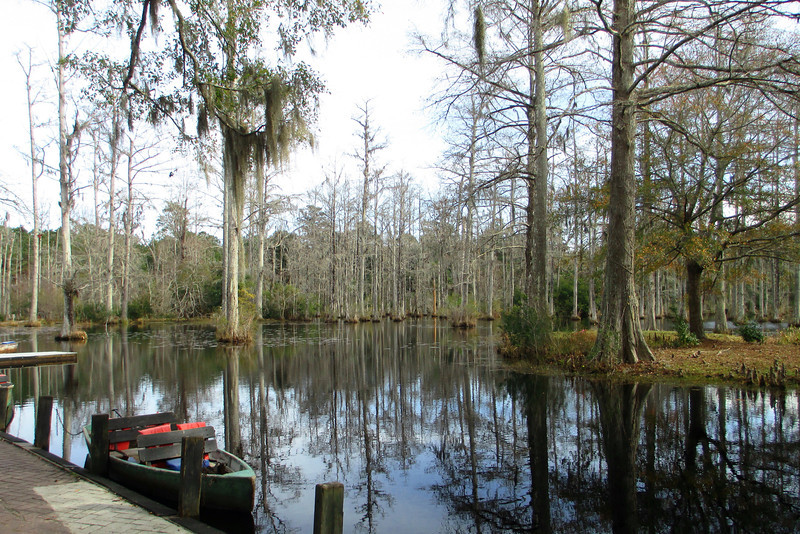 After looking through the buildings it was off to try out Cypress Gardens most popular activity, a half mile boat trip through the cypress swamp...