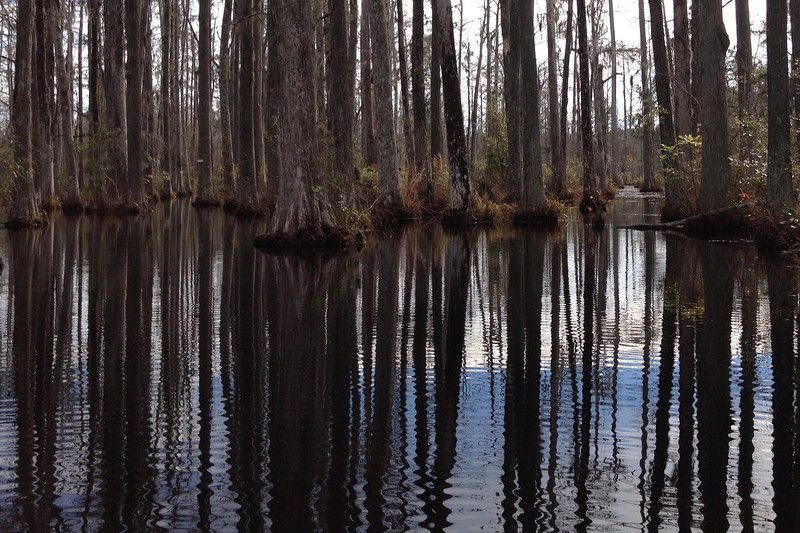 The reflections of the tall cypress in the still water was something we never tired of seeing during our visit...