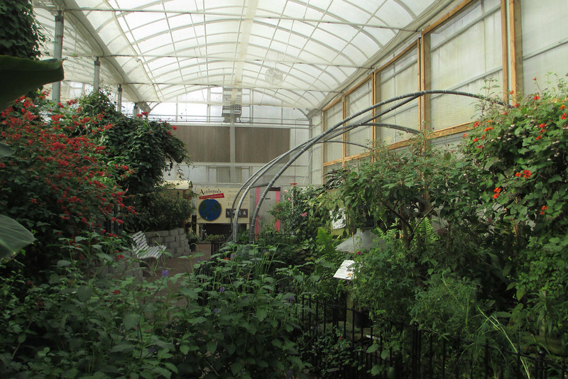 Our first stop was at the butterfly house which housed a beautiful variety of plant life, birds, and of course butterflies...
