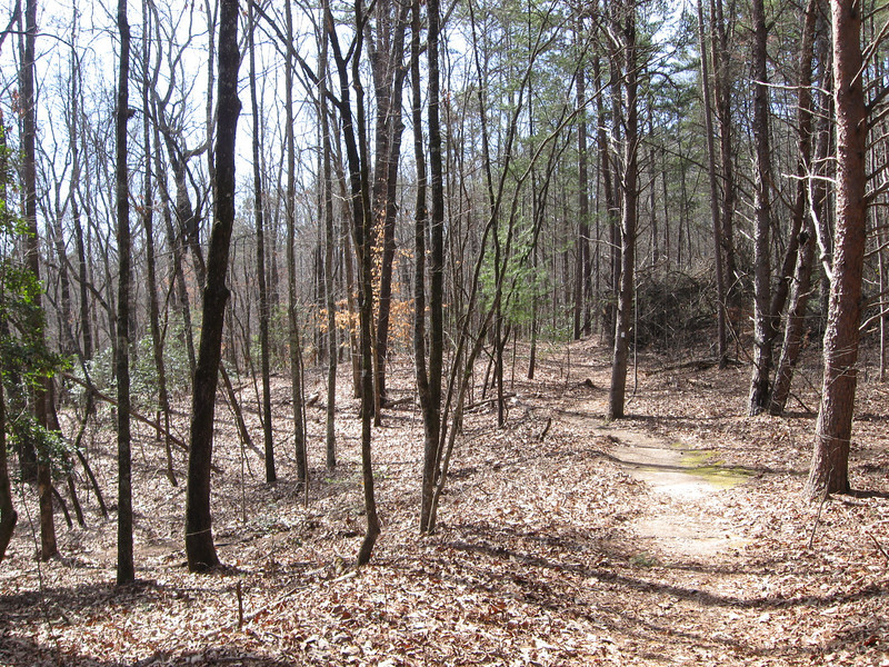 The first part of the trail stays on high ground in an open, young woods of mixed pine and oak...
