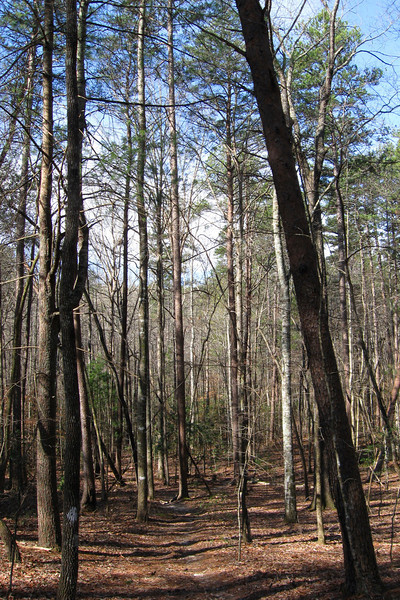 The trail started out with a pleasant, gradual descent through a very young mixed hardwood-pine forest...