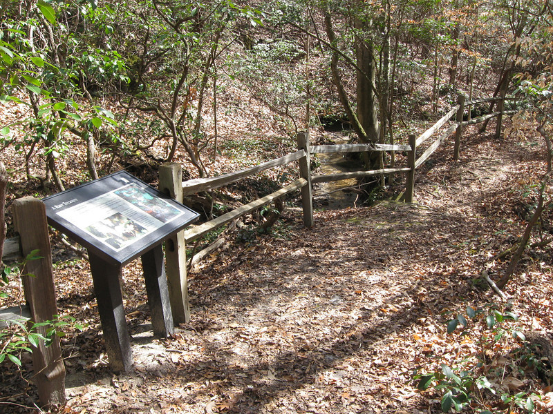 Reaching the creek, a wooden fence helps protect the Oconee Bells along the banks from the feet of wayward visitors.  An interpretive sign also gives a good overview of this unique plant...