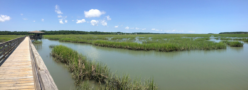 Making our way farther out into the salt water marsh...