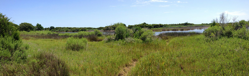 A second opening gave more views of the wetlands the trail was following alongside of...