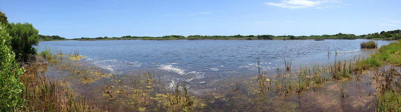 Sandpiper Pond as seen from the first side path down to its shore that I came to.  Once an inlet from the ocean, the pond still occasionally gets flooded during storm making the water brackish (meaning a mix of salt and fresh)...