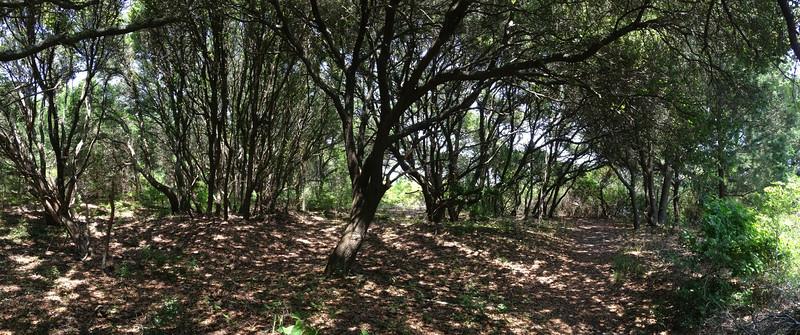 I never tired of walking through these beautiful kaleidoscopic oak groves...