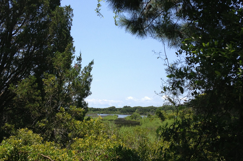 Sandpiper Pond Nature Trail