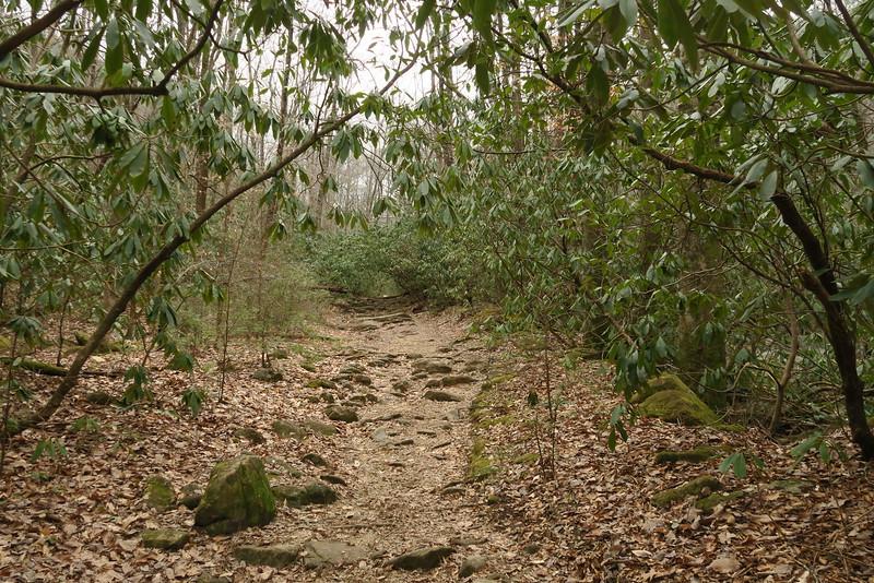 Jones Gap Trail