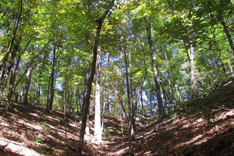 The landscape along this part of the hike was quite steep with numerous shallow ravines worn into the hillside...