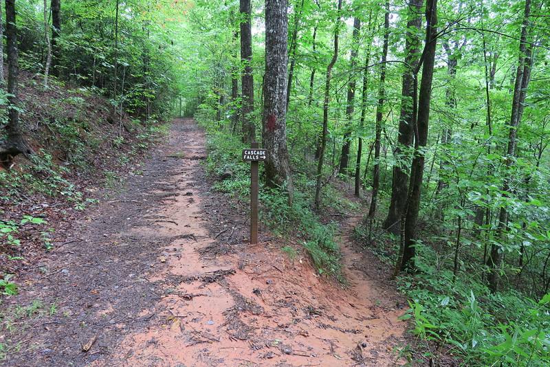 Asbury Trail - Cascade Falls Spur Junction