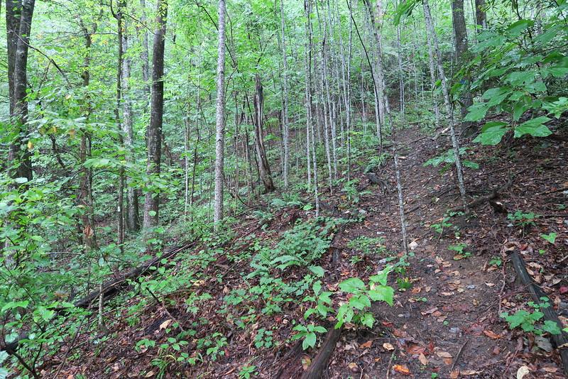 Asbury Falls Spur Trail