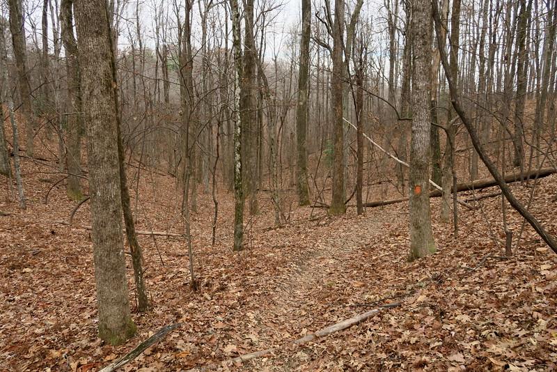 Coldspring Branch Trail -- 2,950'