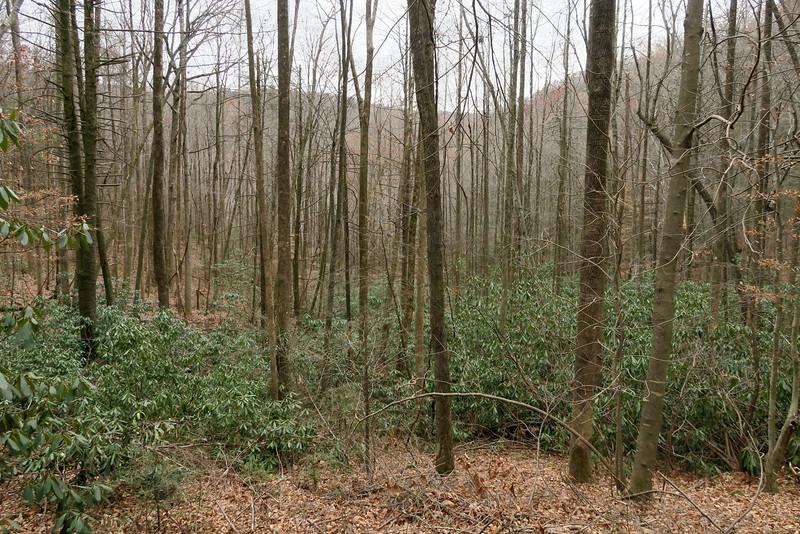 Jones Gap Trail -- 2,150'