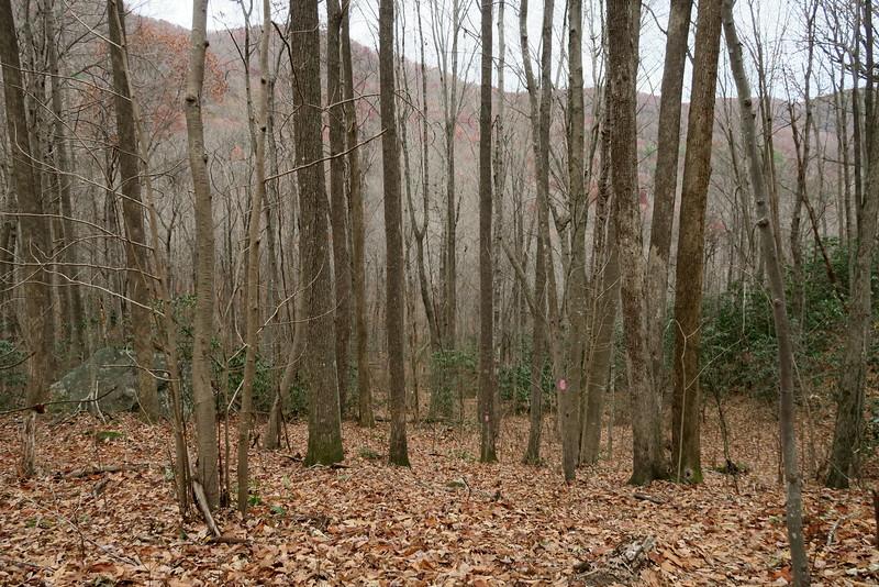 Bill Kimball Trail -- 2,350'