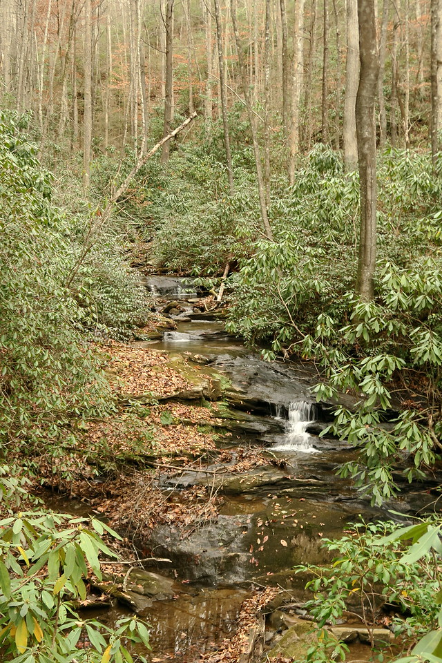 Middle Saluda Tributary -- 2,000'
