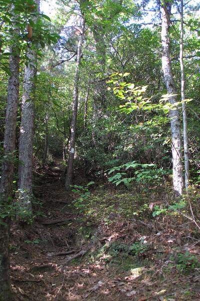 Pinnacle Pass Trail