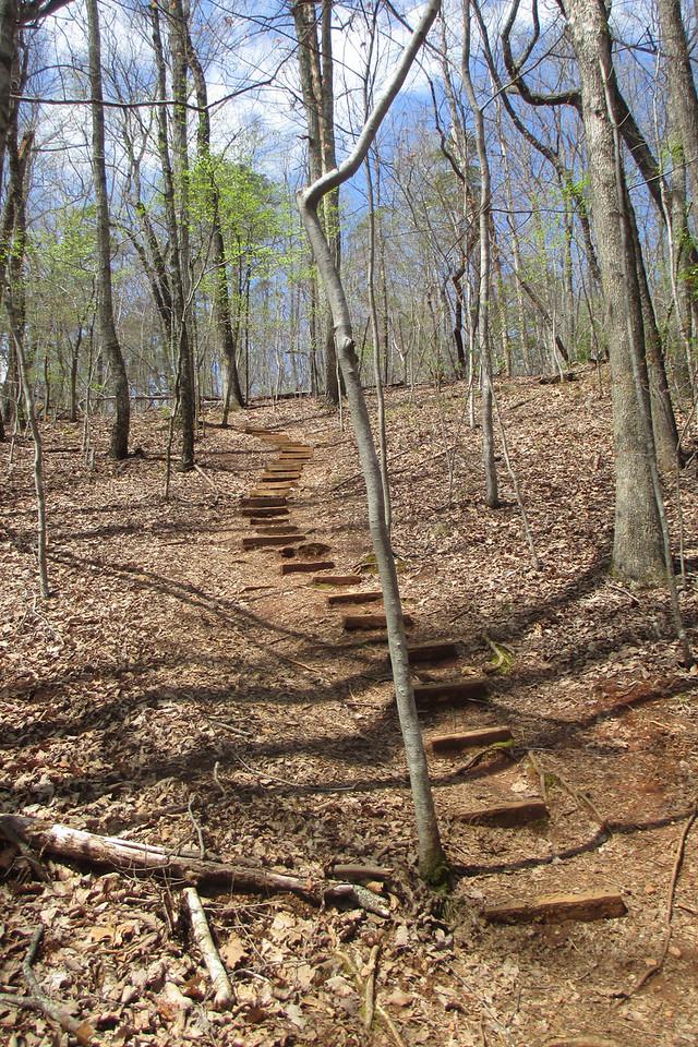 From Buckhorn Creek the Brissy Ridge Trail makes a fairly steep climb...