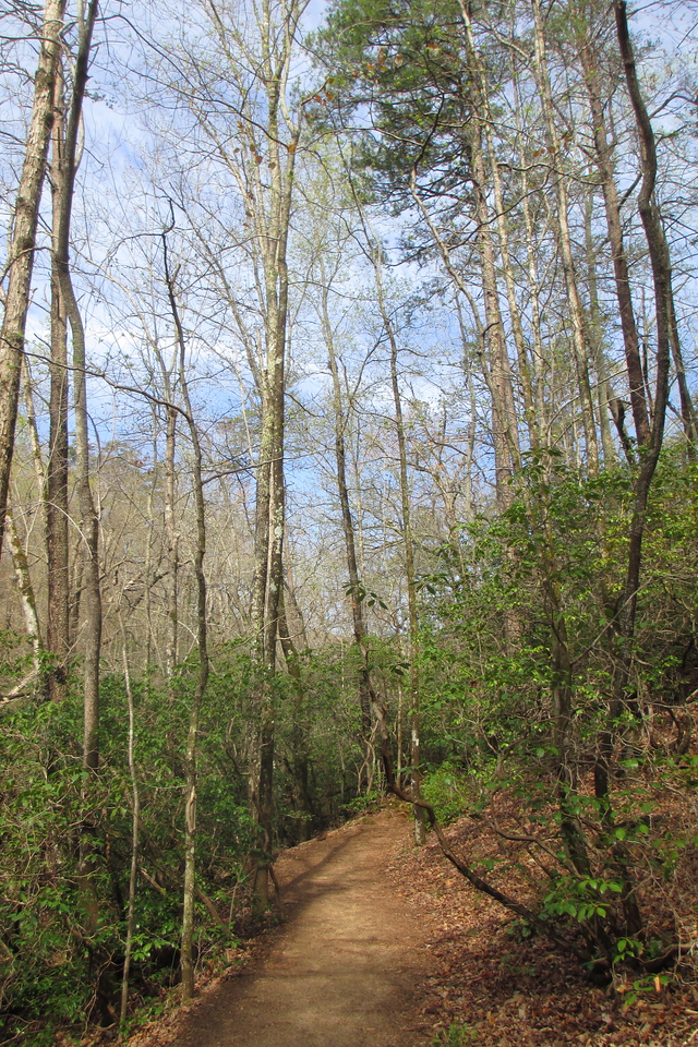 The trail doesn't stray far from the creek on this first portion of the hike but the dense understory prevents you from many opportunities to see it...