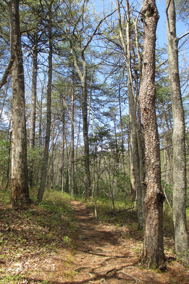The trail continued to run just below the crest of the ridge on a very pleasant grade...