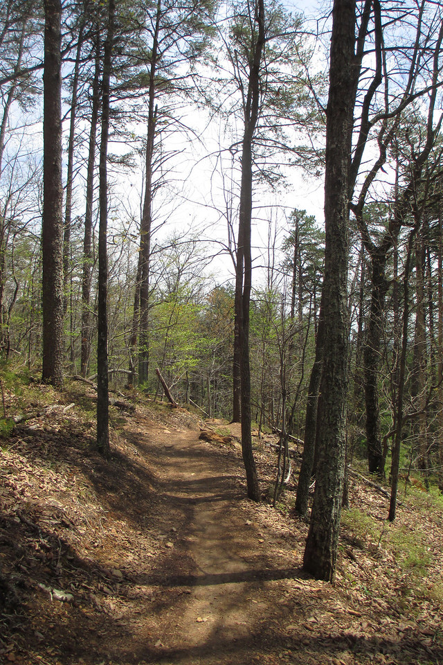 With the short exception of the climb from the road this half of the Sulphur Springs Trail would be entirely downhill...