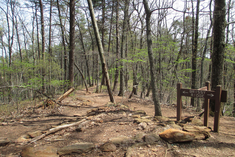 The Kanuga Trail comes to an end at this T-intersection with the Brissy Ridge Trail.  I'd be taking a left here following the eastern boundary of the park...