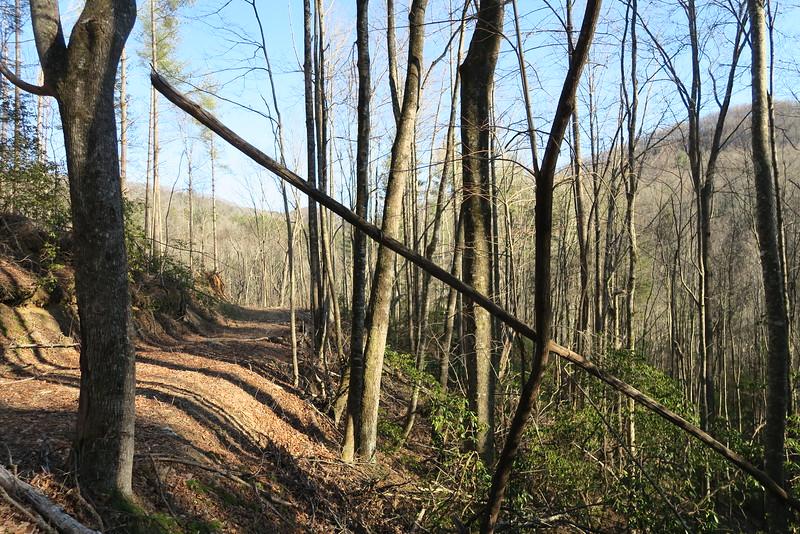 Pinnacle Falls Trail