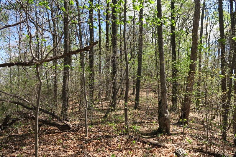 Ridge Trail - 2,750'