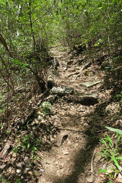 Mill Creek Falls Trail - 2,200'