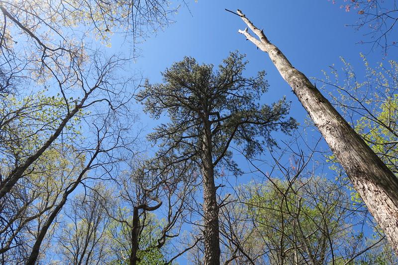 Ridge Trail - 2,900'