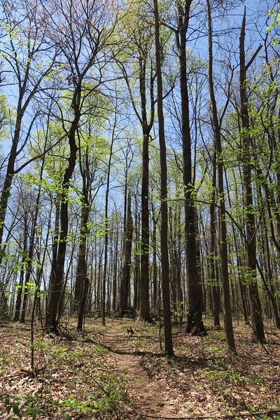 Ridge Trail - 3,120'