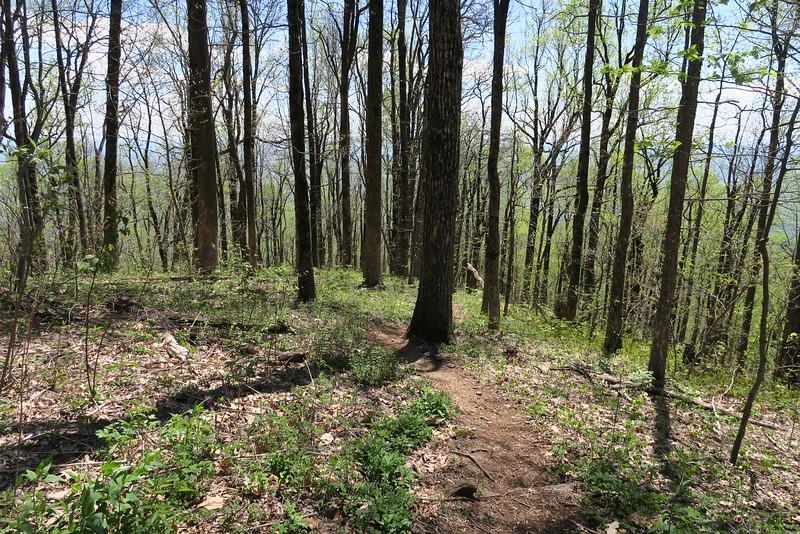 Pinnacle Mountain Trail - 3,400'