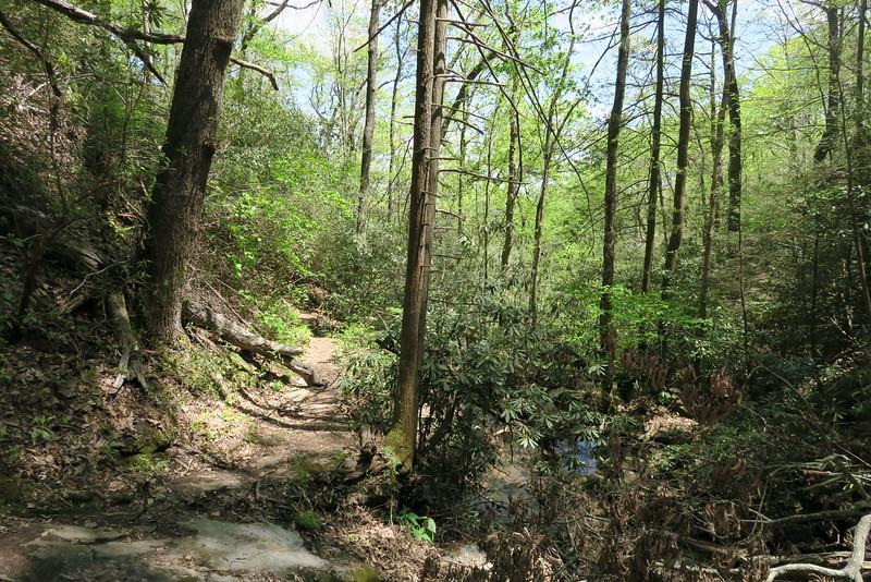 Mill Creek Falls Trail - 2,260'