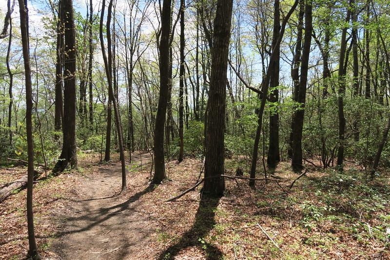 Pinnacle Mountain Trail - 2,360'