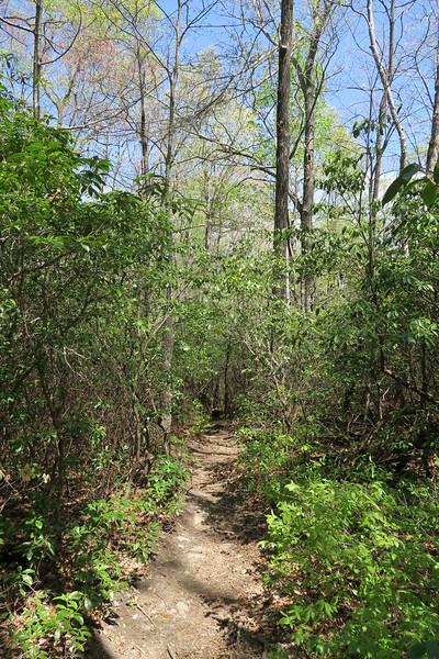 Pinnacle Mountain Trail - 2,700'