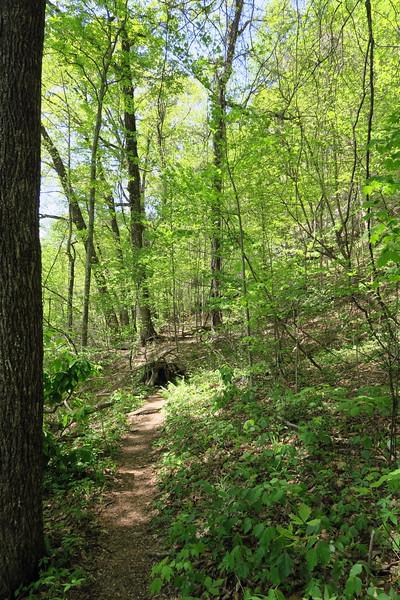 Mill Creek Falls Trail - 2,180'