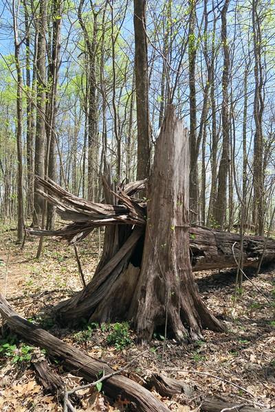 Ridge Trail - 3,250'