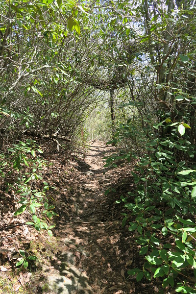 Pinnacle Mountain Trail - 2,800'