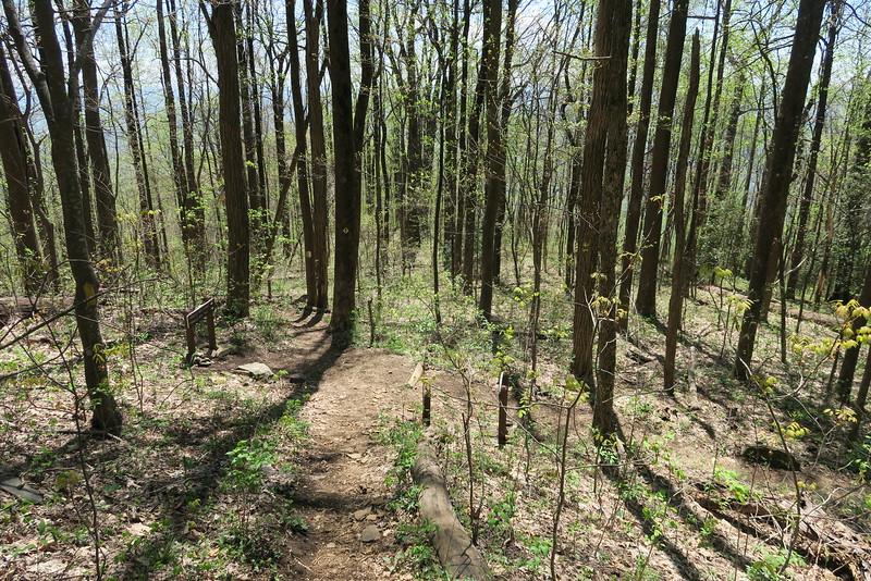 Pinnacle Mountain Trail - 3,000'
