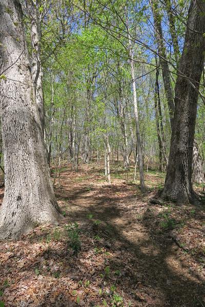 Ridge Trail - 2,640'