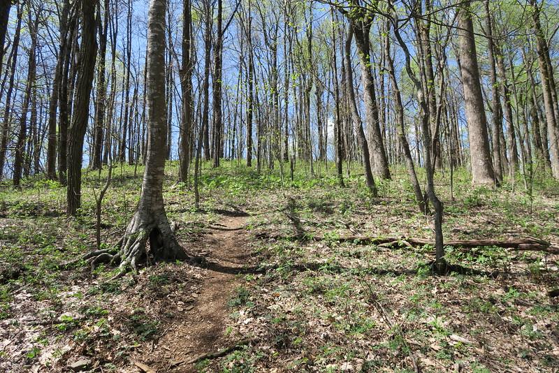 Ridge Trail - 3,380'