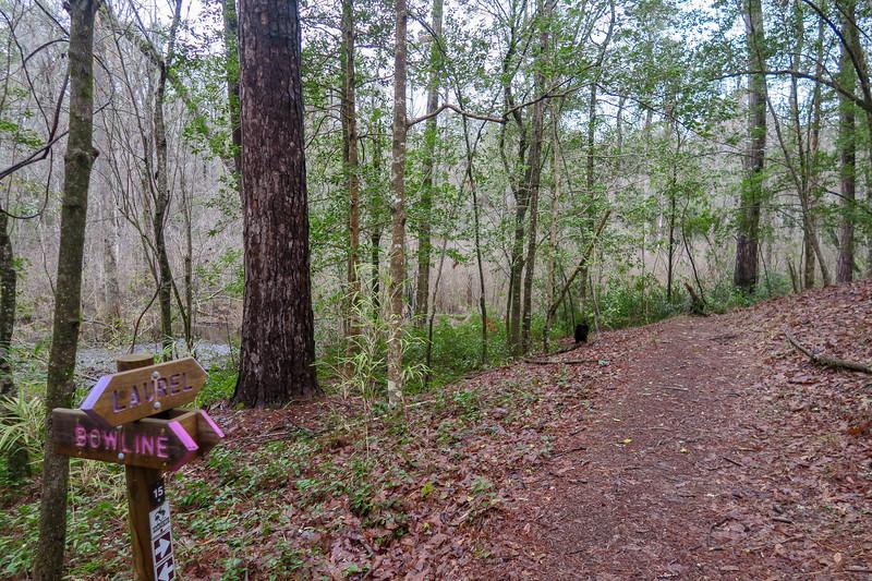 Bowline/Laurel Trail Junction