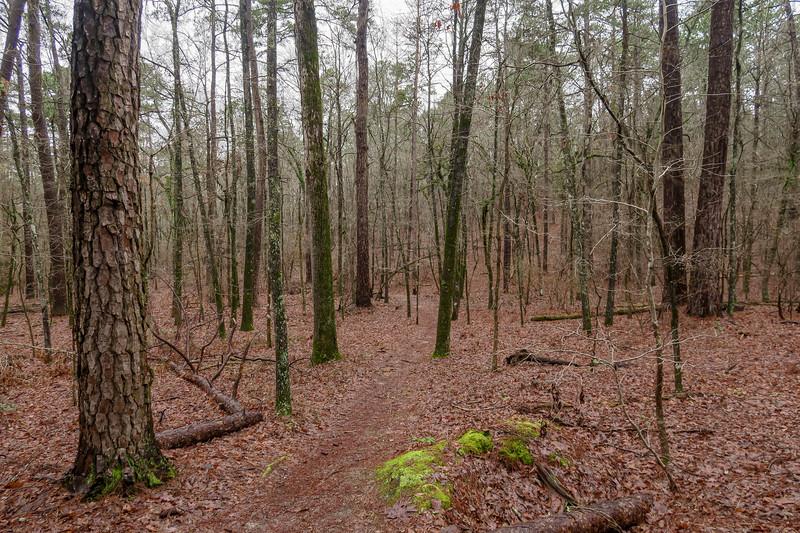 Splice Trail