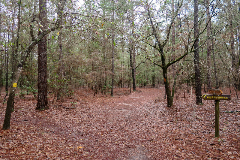 Scout Loop/Whippoorwill Trail South Junction