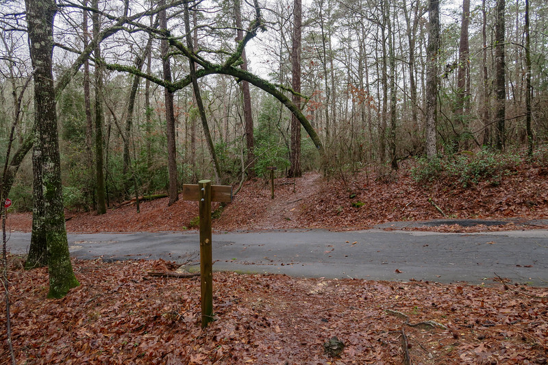 Splice Trail @ Cabin Loop Road