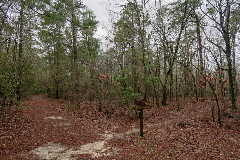 Scout Loop/Whippoorwill Trail Middle Junction