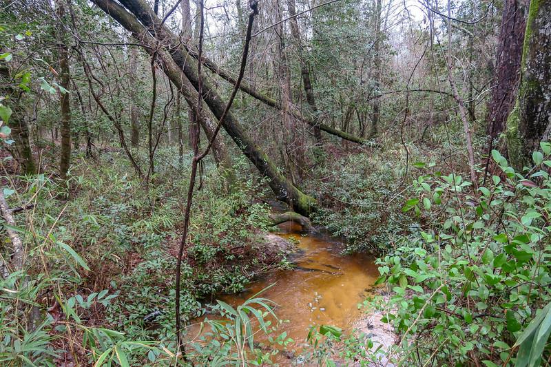 Shank's Creek