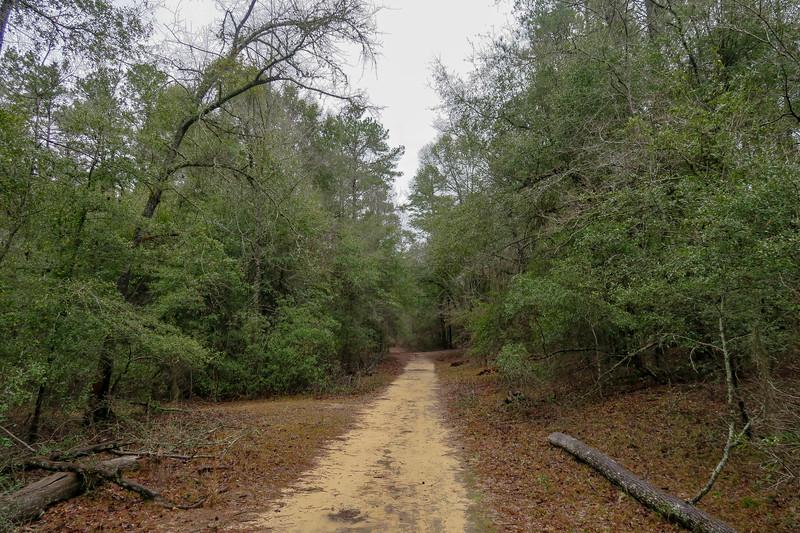Scout Loop Trail