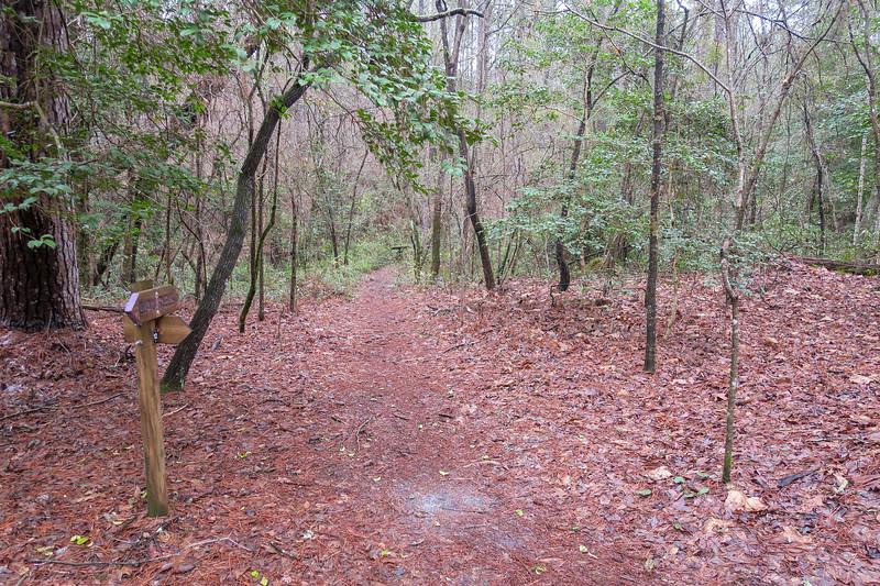 Laurel/Hi Knot Trail Junction