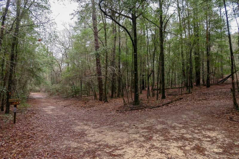 Scout Loop/Cowasee Trail Lower Junction